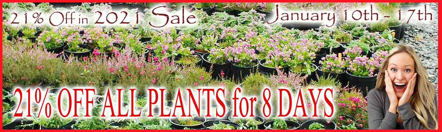 21% Off All Plants for 8 Days