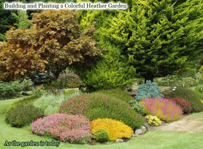 How the Heather Garden Looks Today