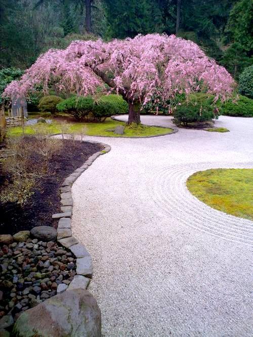 Flowering Cherry Garden