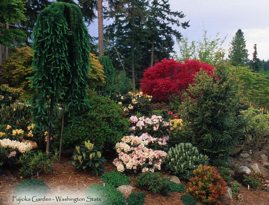 Frank Fujioka Garden