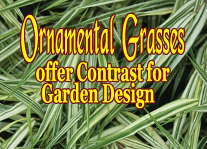Garden Designing With Ornamental Grasses