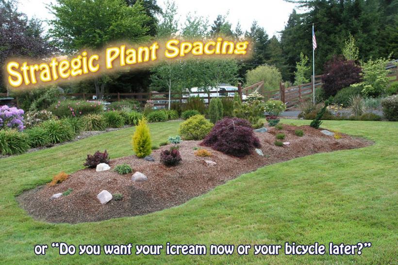 Strategic Plant Spacing