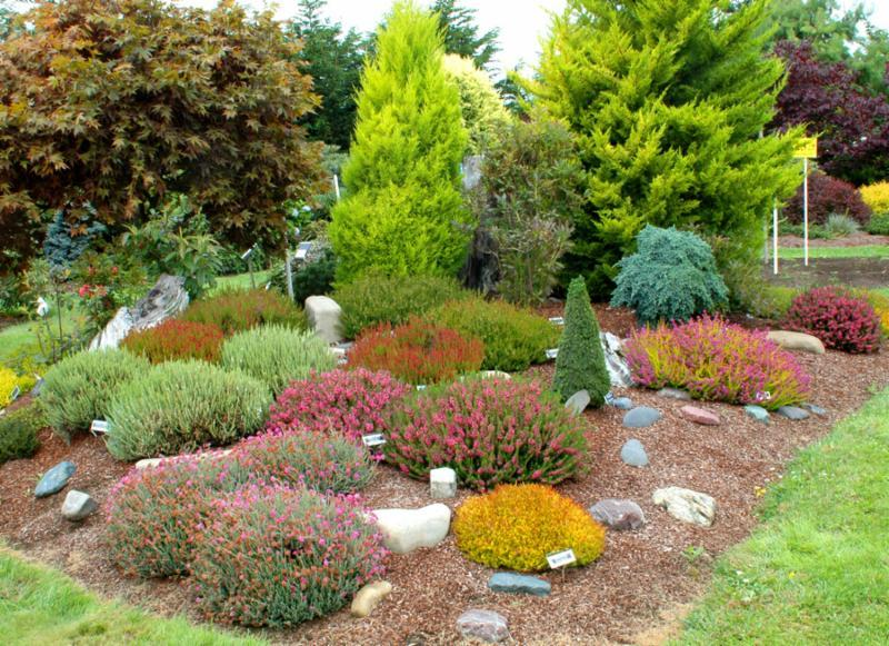 Building And Planting A Colorful Heather Garden Singing Tree